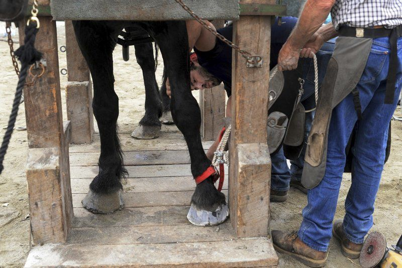 A little clip and trim: Horses get visit from the farrier
