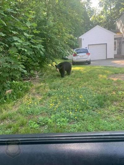 Bear spotted in Haverhill neighborhood