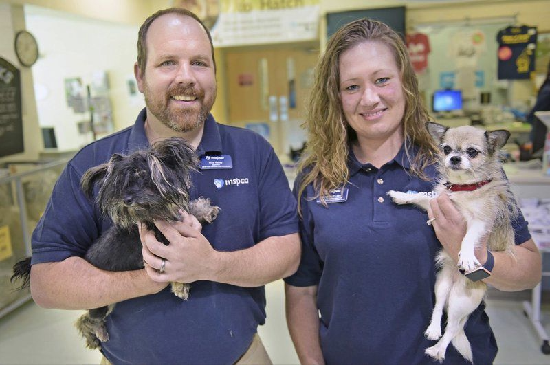 mspca methuen ma adoption center