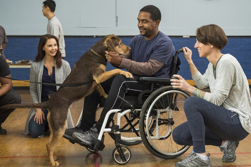Movie Review A Dog S Way Home Is Saccharine And Sentimental
