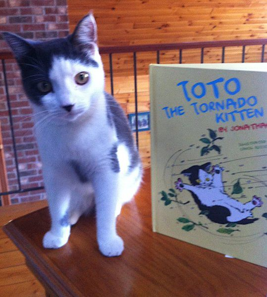 Toto the Tornado Kitty\' coming to West Newbury library | North Of ...