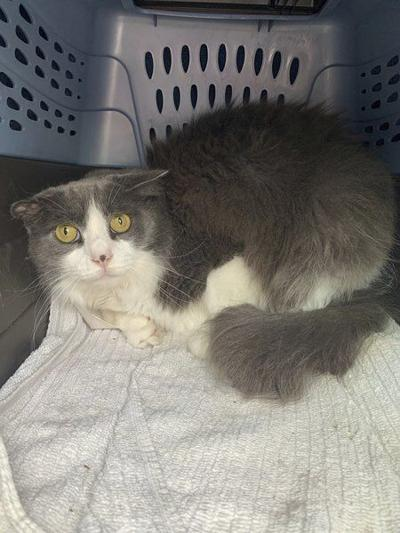 Six years later, missing Peabody cat found