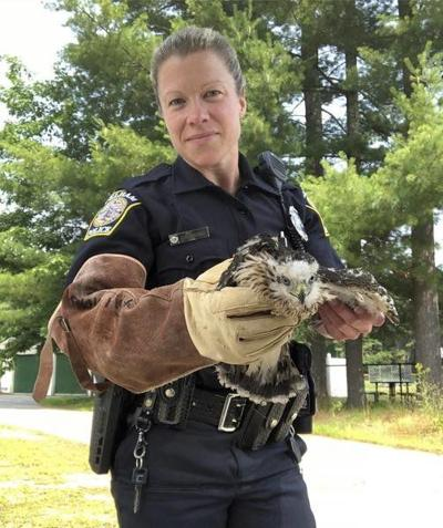 Baby hawk rescued in Pelham