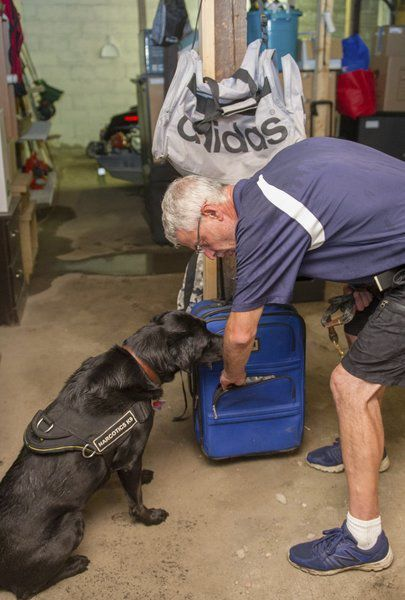 Drug dog for hire: Lawrence man and dog 'Moxie' sniff out narcotics