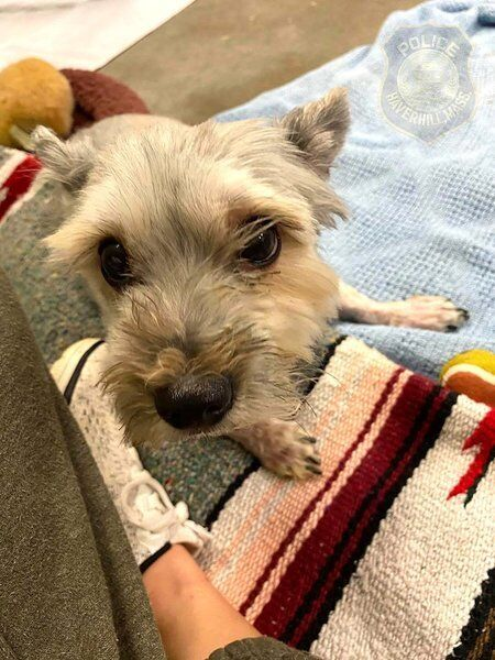 Haverhill PD searches for pet's owner