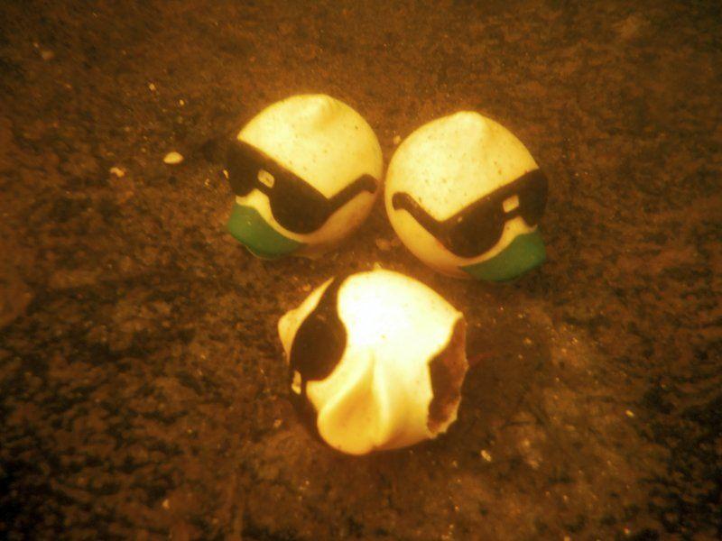 Rubber Duck dilemma: Hundreds litter river bottom | Haverhill ...