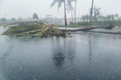 Tree and debris in road during typhoon