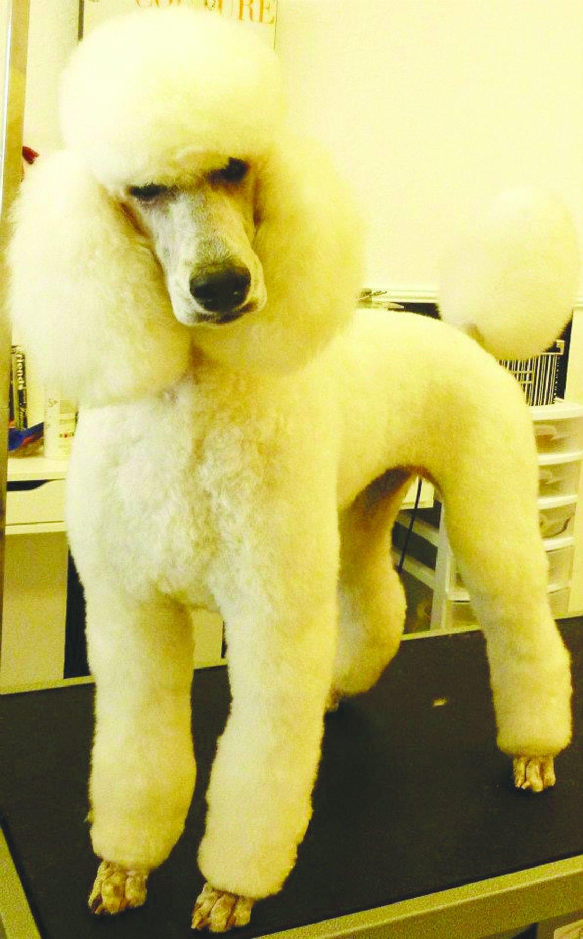 Best Pet Services: Fancy Furr n' Purr