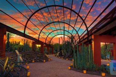 Luminarias Light Up Desert Botanical Garden Get Out