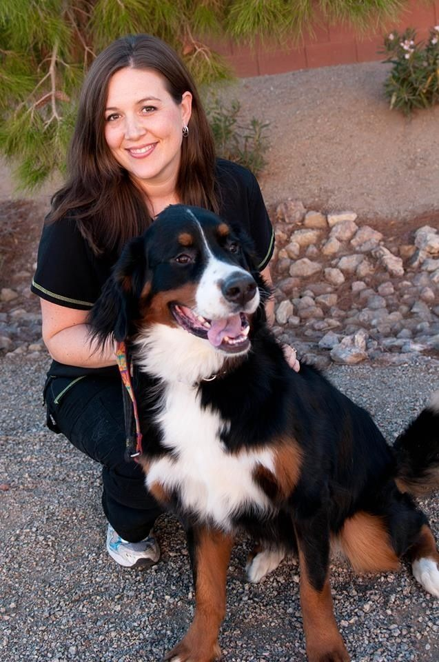Best of Chandler 2014 Veterinarian: Animal Medical Center of Chandler