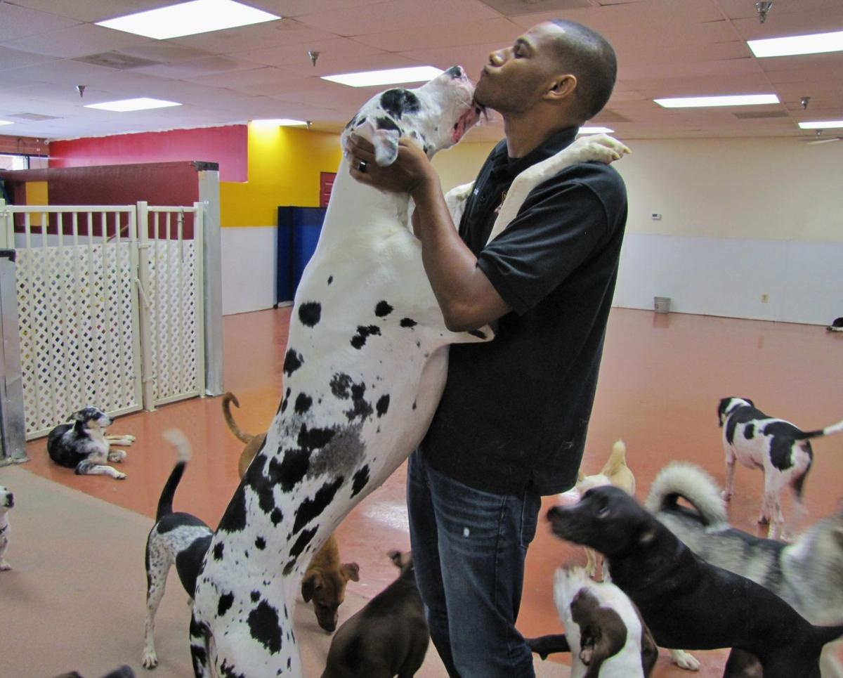 Best of Chandler 2014 Pet Services: Chandler Dogs 24/7