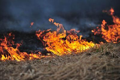 8114511 - field on fire, burning dry grass