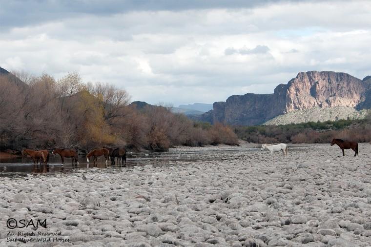Salt River horses