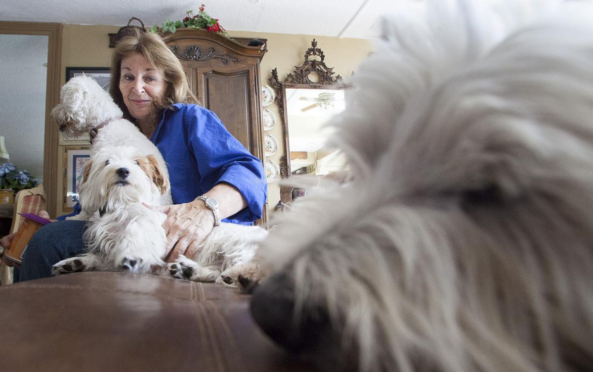New shelter in Mesa hosts Westie terriers | Mesa