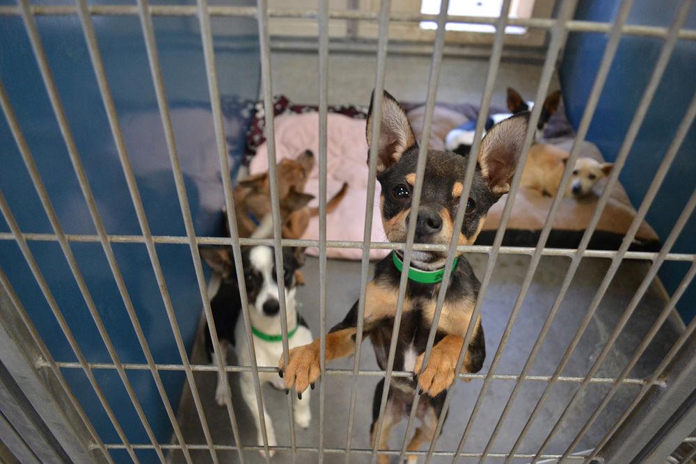 pet shelter
