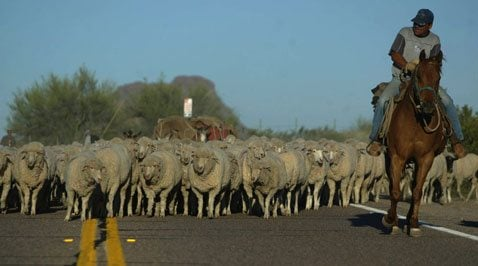 Group sues to stop S.E. Valley sheep drive