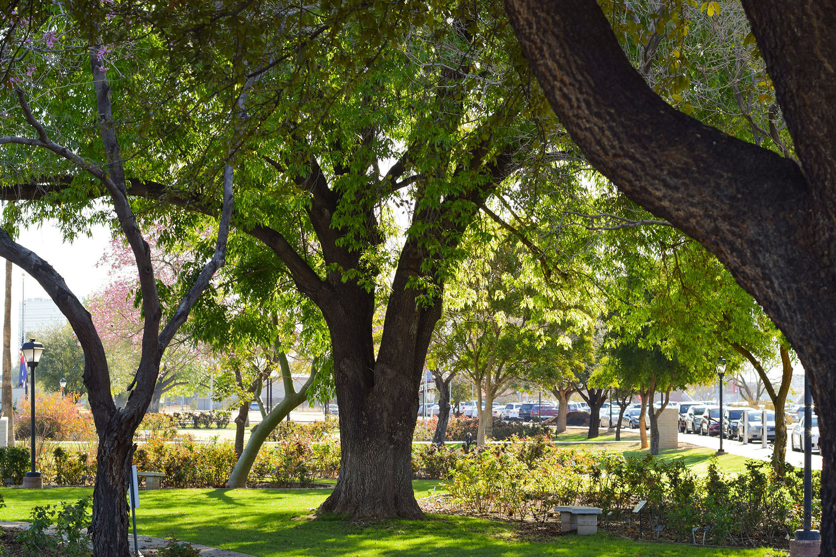 Mesa Community College now home to state's first accredited arboretum | East Valley Tribune
