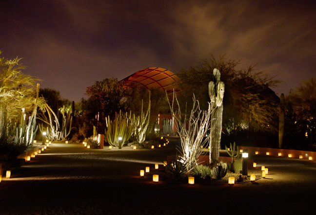 Desert Botanical Garden Kicks Off Las Noches De Las Luminarias Friday