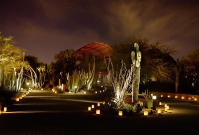 Desert Botanical Garden Kicks Off Las Noches De Las Luminarias Friday Events Eastvalleytribune Com