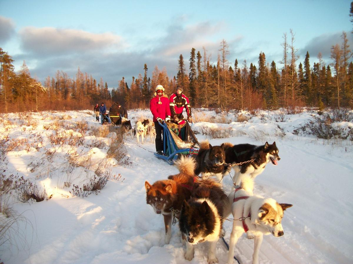 Dog sledding in Ely