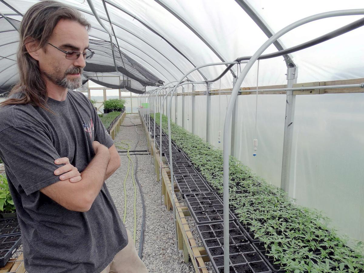 Illinois hemp farmers leverage high risk for high profit