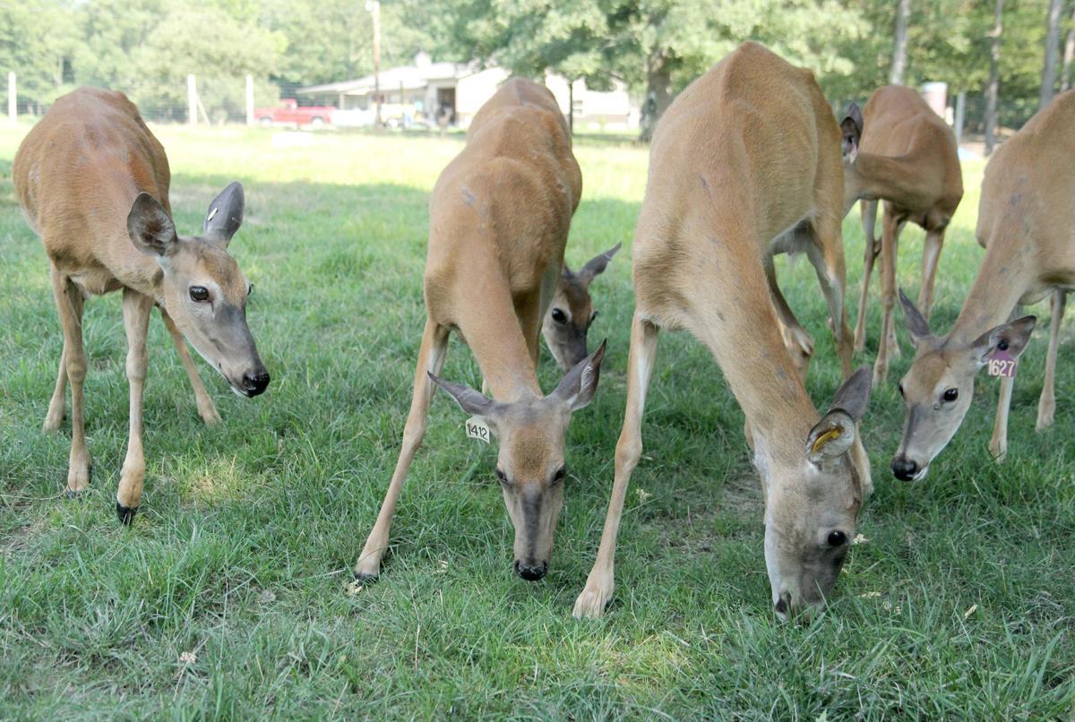 0726 EF deer 1.jpg