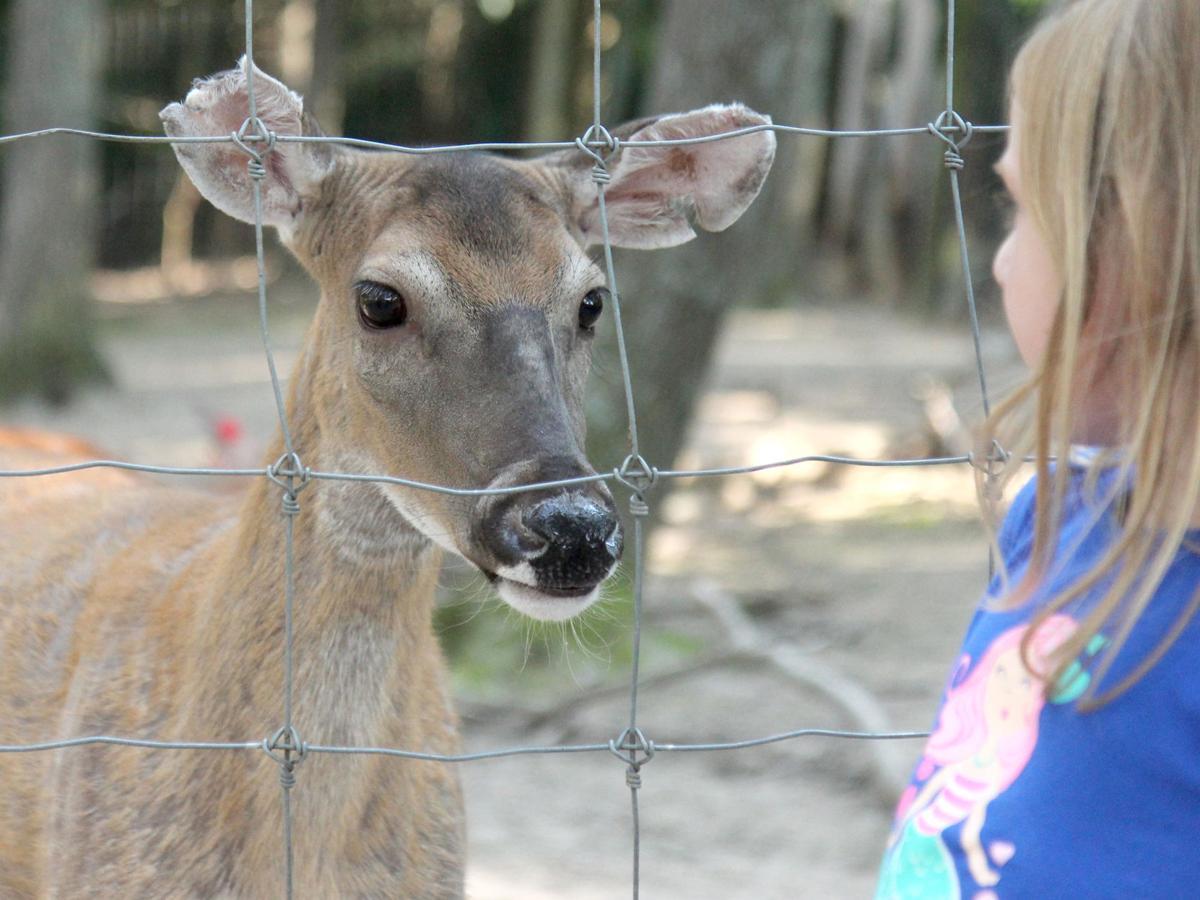 0726 EF deer 2.jpg