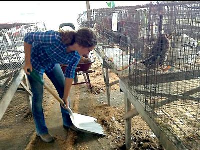 Cleaning up after the chickens at the fair