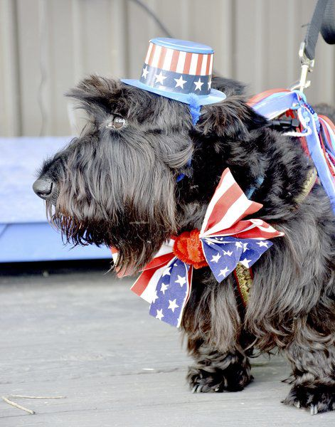Dogs compete for top honors in annual show