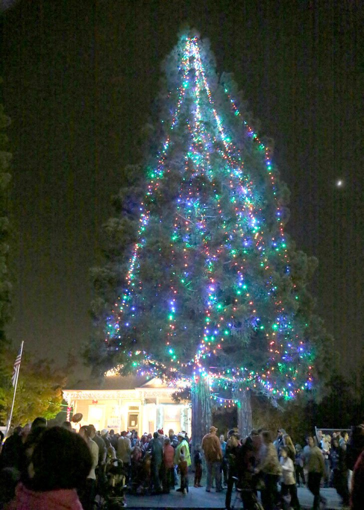 community's Christmas tree - Christmas Is Officially Here In Elk Grove News Egcitizen.com