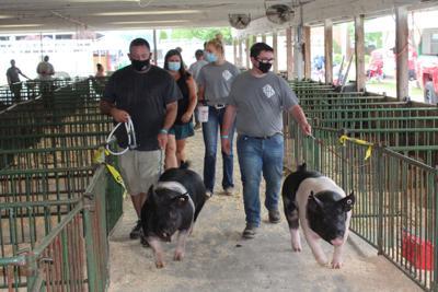 Nathan Rasler 4-H swine club