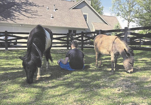 Educators hitch up to therapeutic horses
