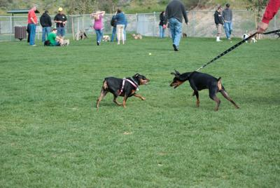 Nappanee Dog Park hosting events, fundraisers throughout 2015
