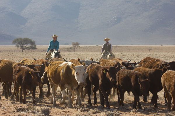 Wild West comes to Shipshewana