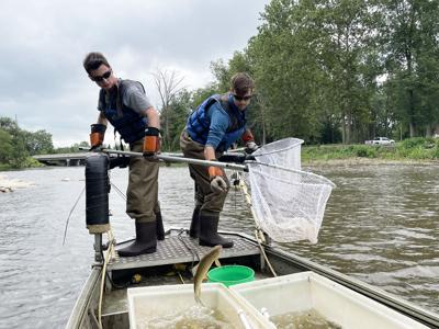 Owen Slater and Simon Graber Miller electrofishing with Daragh Deegan Elkhart River