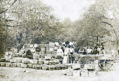 'Bristol Fruit Hills' is story of county's agriculture industry