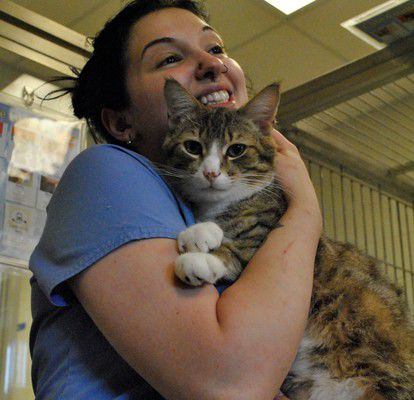 Humane Society bursting with cats