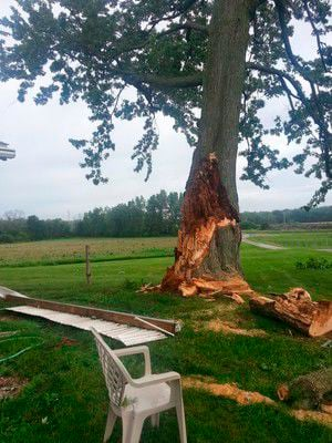 Blustery winds reveal weaknesses in trees