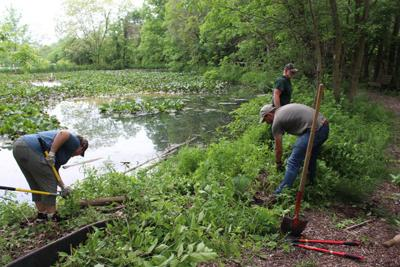 Volunteers push back after rainy May lets weeds take over