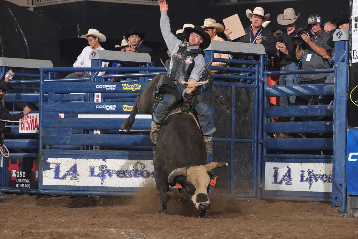 Bull photo 1