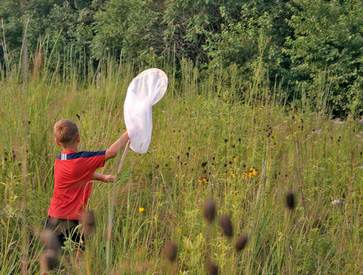 Insects highlighted at annual Bug Night