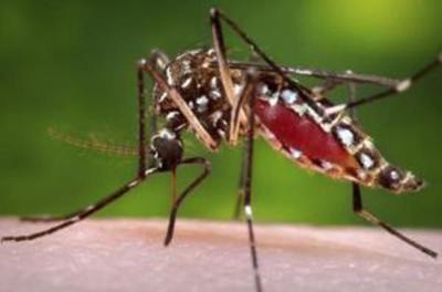 Health officials urge protection against rare mosquito-borne virus