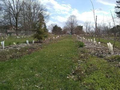 Community orchard to be planted in Goshen