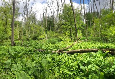 Wesdorp Nature Preserve