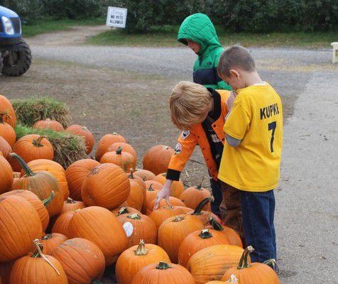 Still time to get pumpkins