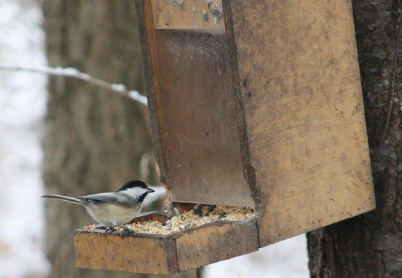 Locals take part in annual bird count
