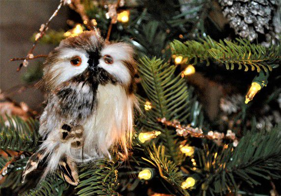 Festival of Trees rings in the holidays