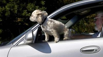 Driving with Fido: Legal in most states, controversial in all