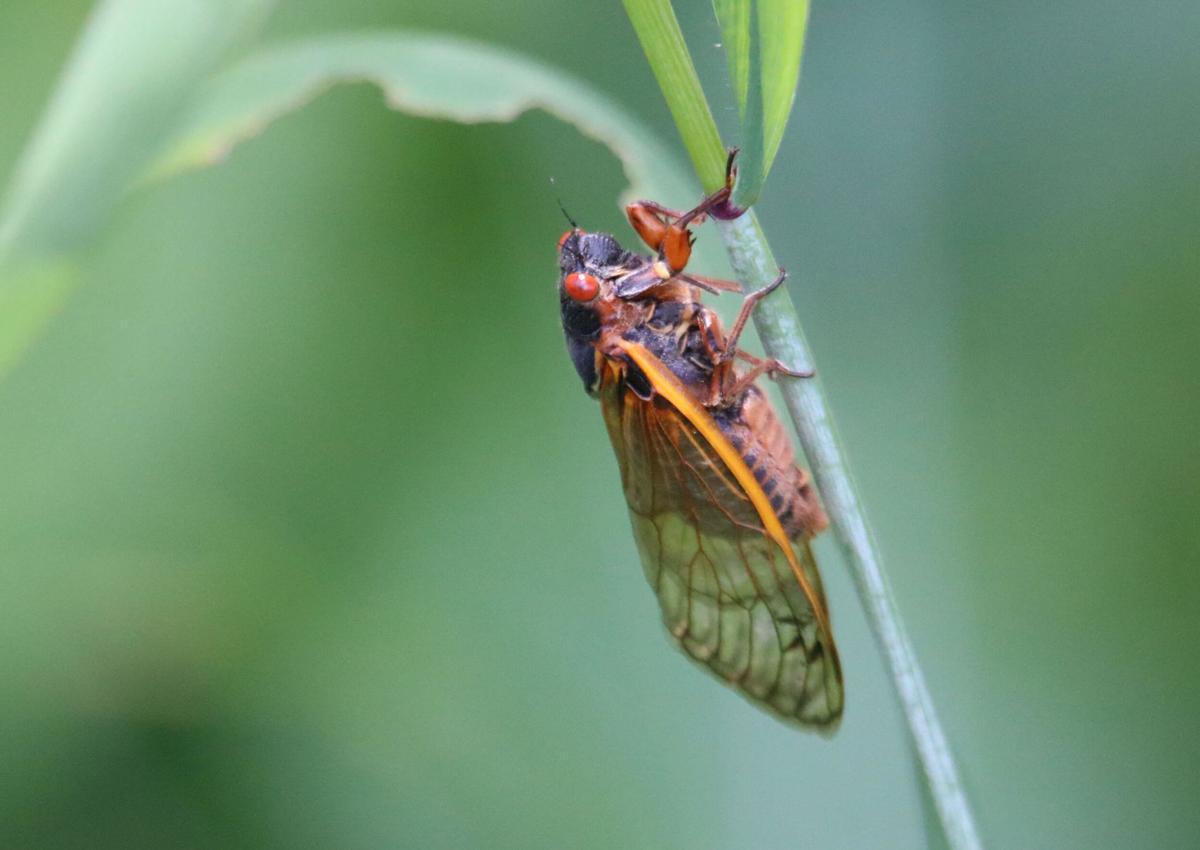 Bug_Night_2.jpg