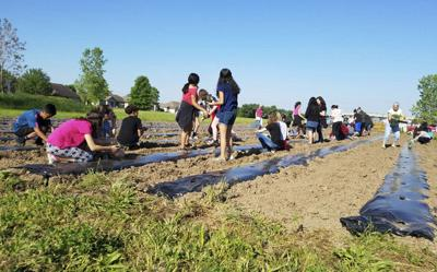 Goshen Health Community Garden shares harvest with local food pantries